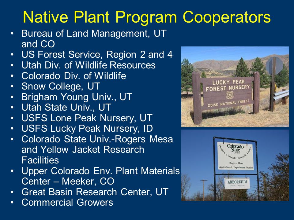 Native Plant Program Cooperators Bureau of Land Management, UT and CO US Forest Service, Region 2 and 4 Utah Div.