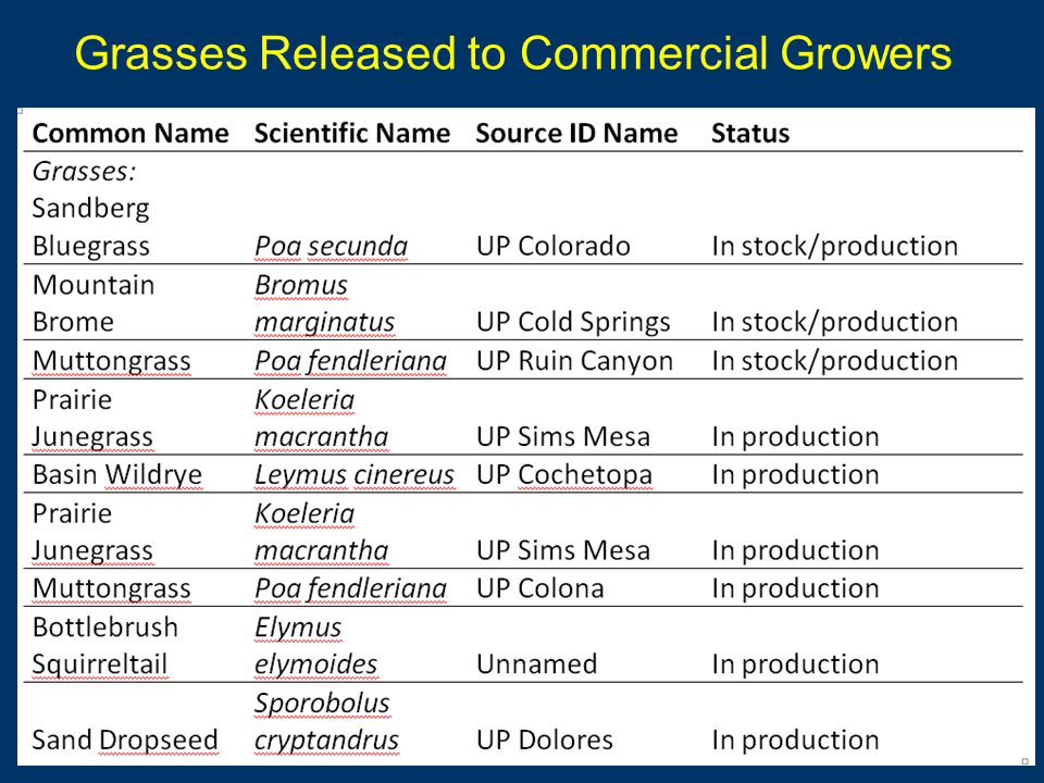 Grasses Released to Commercial Growers