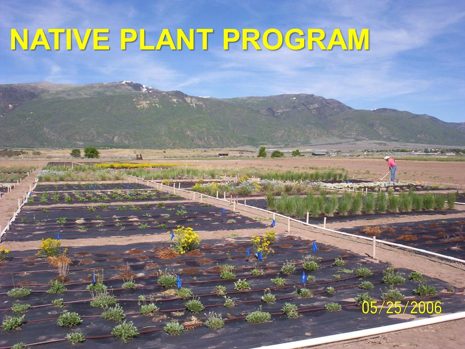 To facilitate the collection and propagation of species native to the Colorado Plateau for use in the restoration of native plant communities on public and private lands.