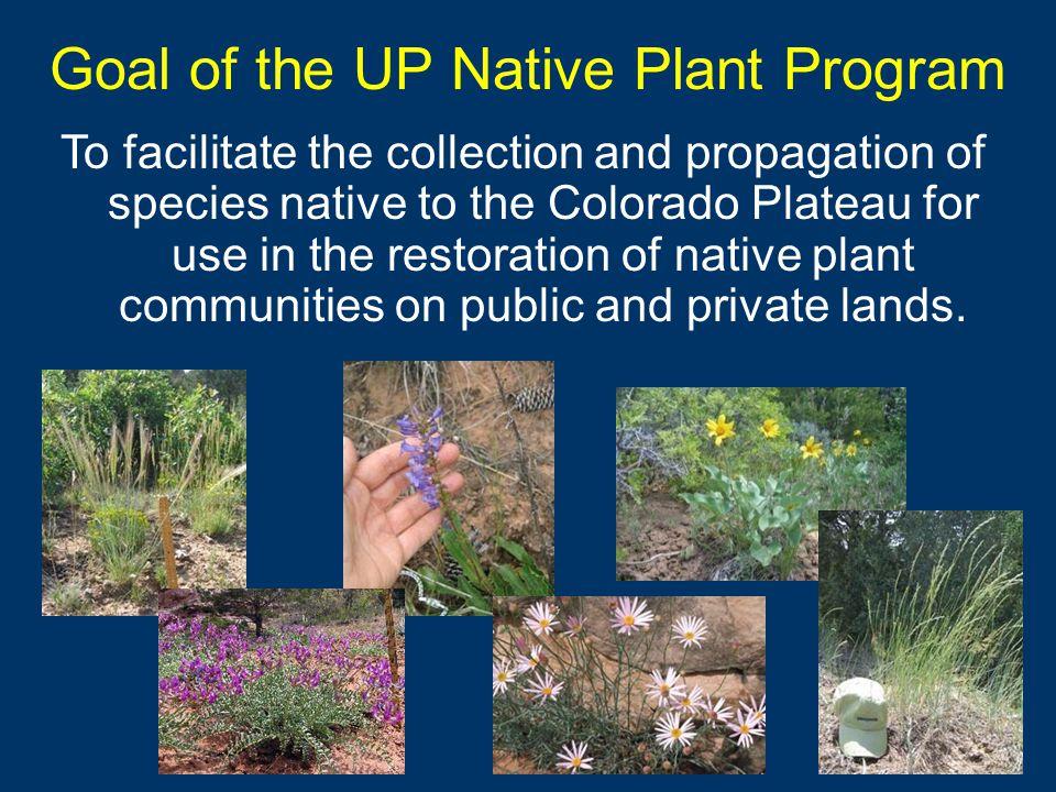Expansion of the Program 2002 2005 Uncompahgre Plateau Upper Colorado Plateau Region 2009 Colorado Plateau Native Plant Initiative