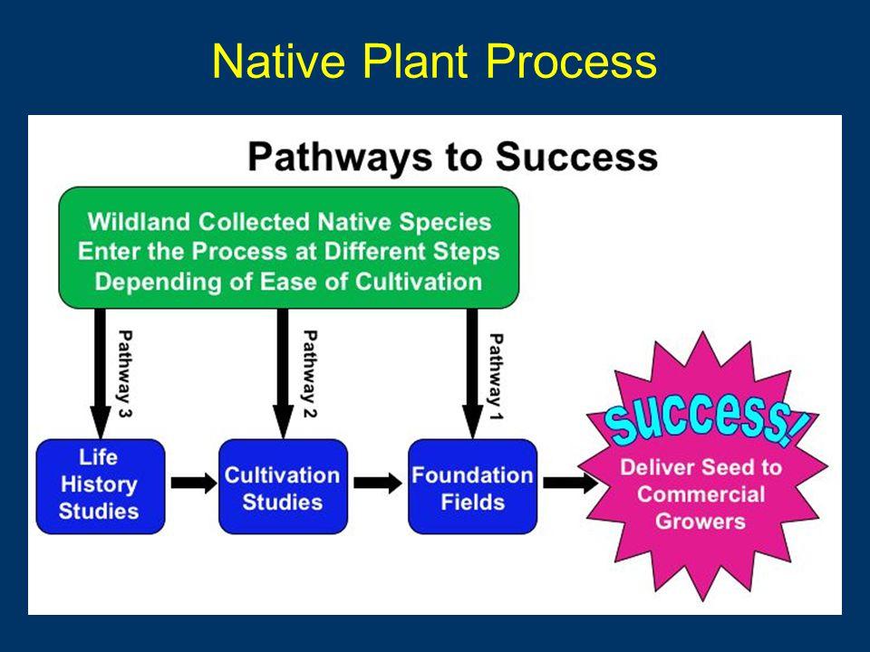 Collected 50 species Cultivation Studies –18 species Life History –11 species Foundation Fields –15 species Seed Increaser Plots –31 species Studies & Propagation