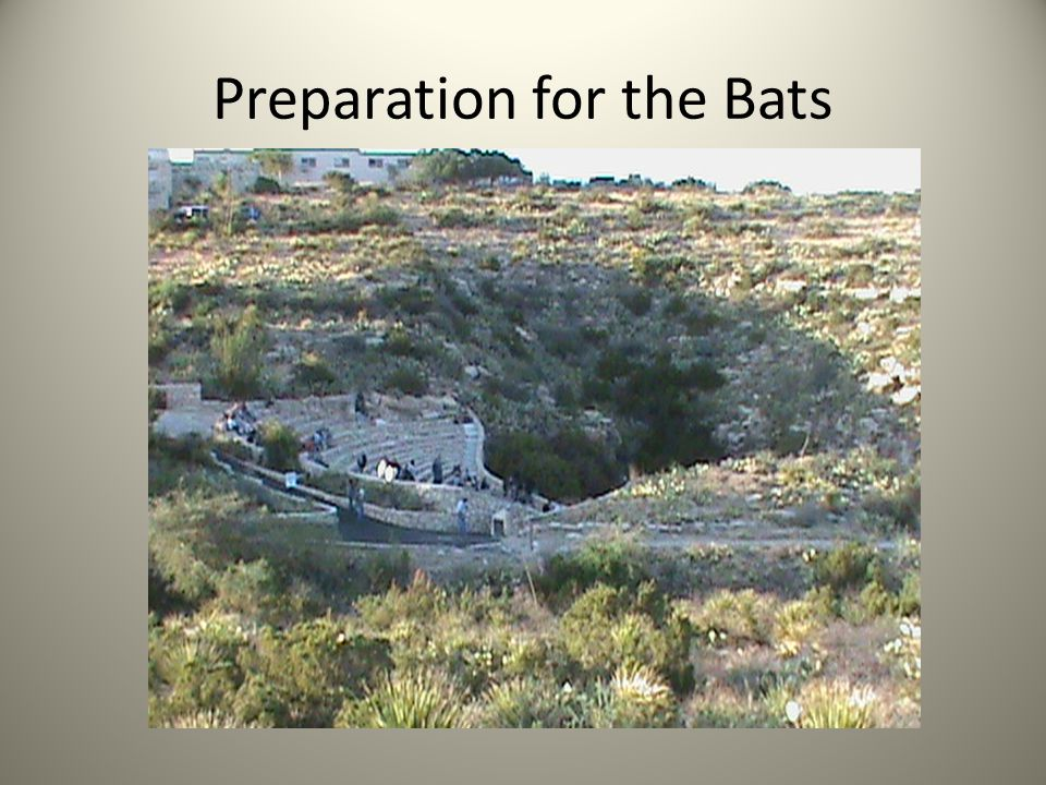 Preparation for the Bats