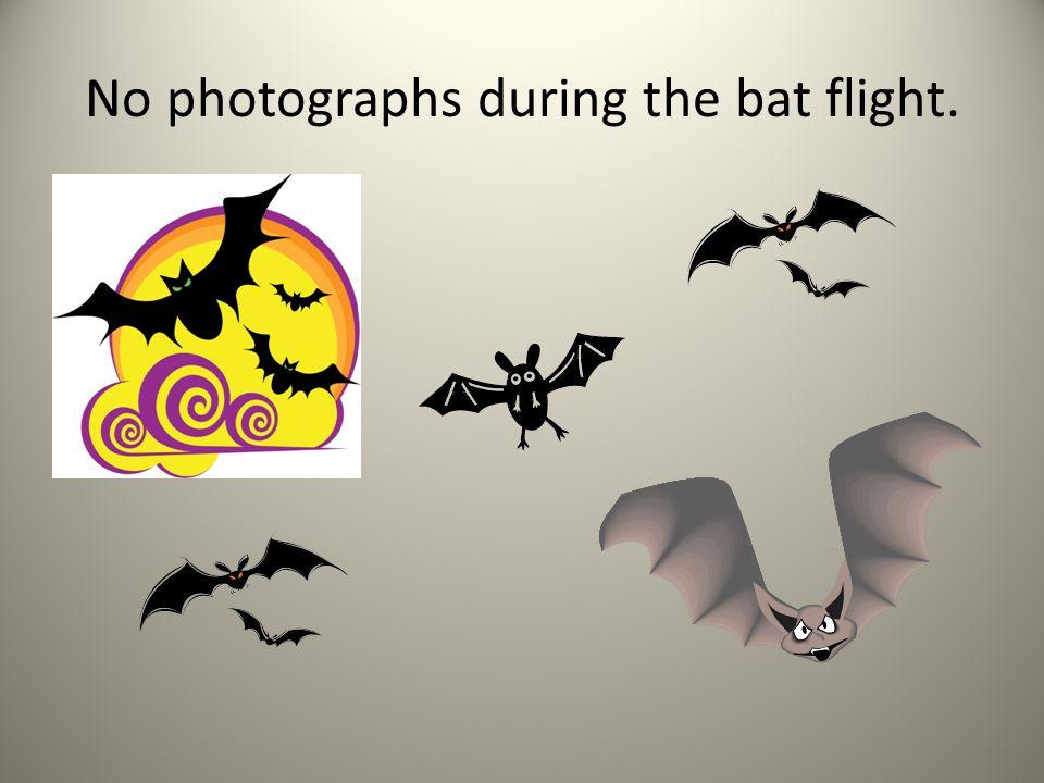 No photographs during the bat flight.
