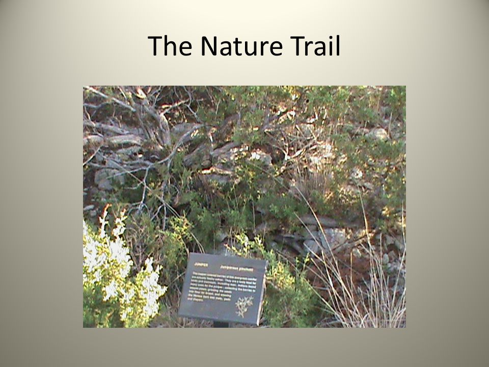 The Nature Trail
