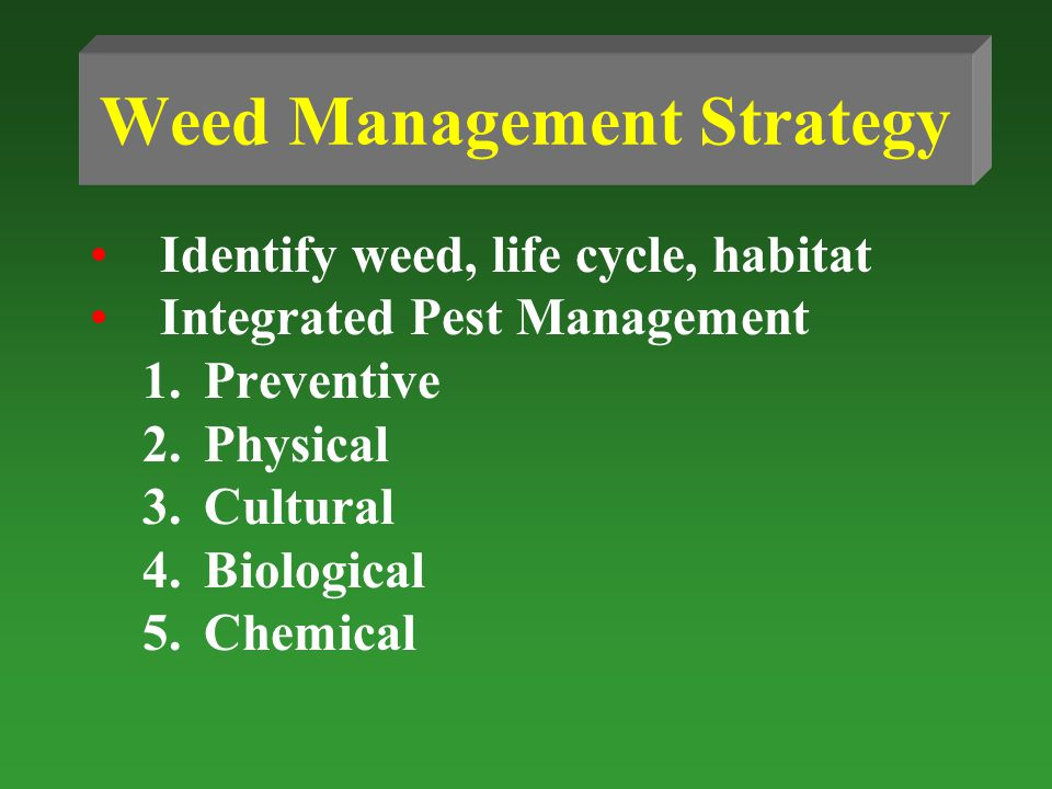 Weed Management Strategy Identify weed, life cycle, habitat Integrated Pest Management 1.Preventive 2.Physical 3.Cultural 4.Biological 5.Chemical