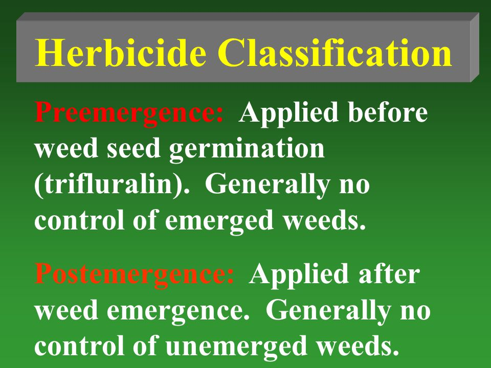Herbicide Classification Preemergence: Applied before weed seed germination (trifluralin).