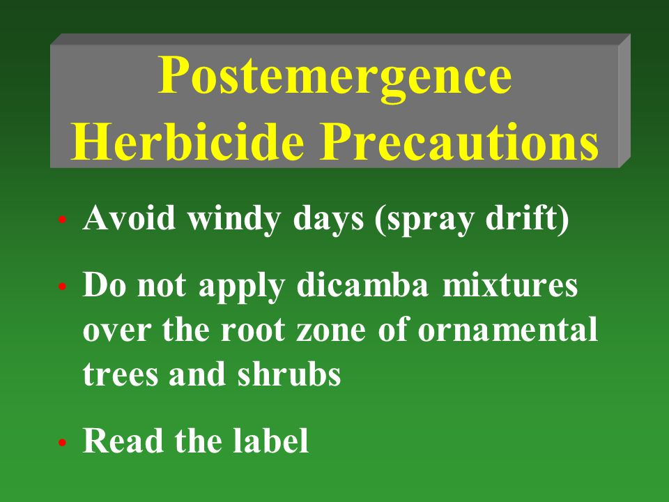 Postemergence Herbicide Precautions Avoid windy days (spray drift) Do not apply dicamba mixtures over the root zone of ornamental trees and shrubs Read the label