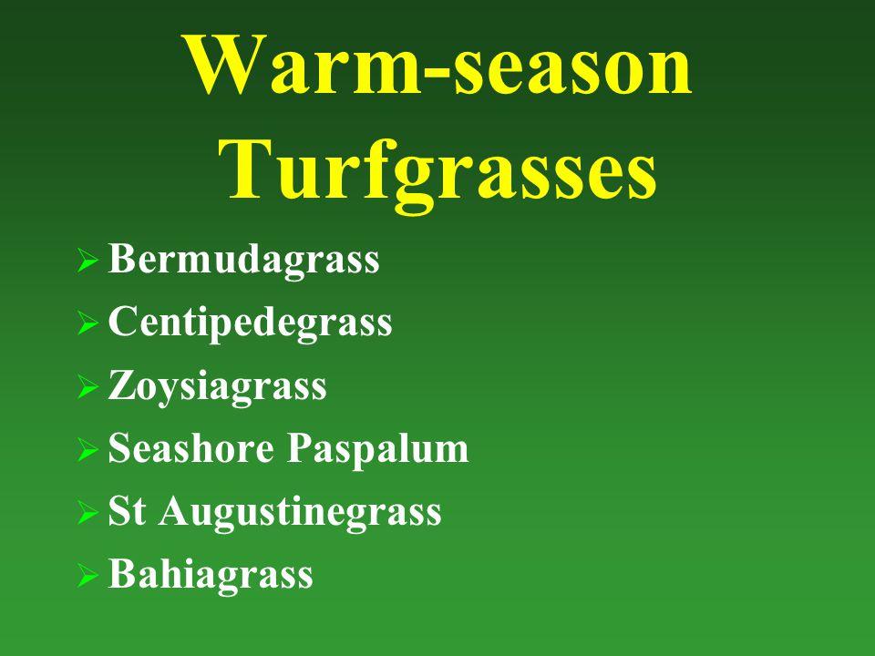 Warm-season Turfgrasses  Bermudagrass  Centipedegrass  Zoysiagrass  Seashore Paspalum  St Augustinegrass  Bahiagrass