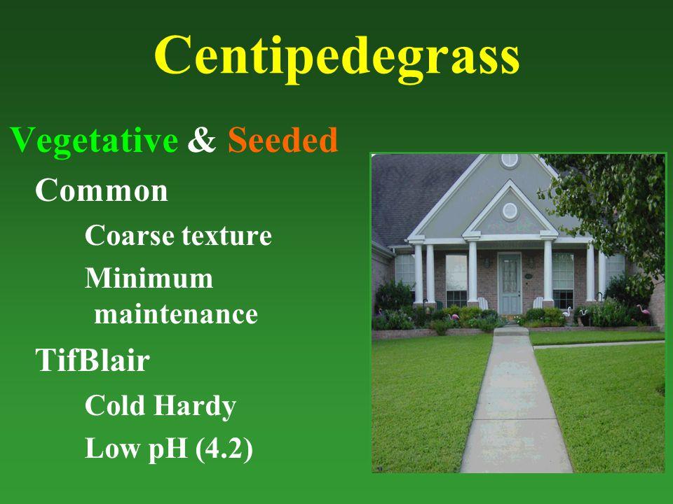 Centipedegrass Vegetative & Seeded Common Coarse texture Minimum maintenance TifBlair Cold Hardy Low pH (4.2)