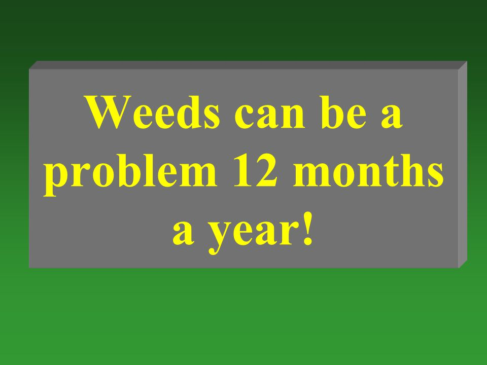 Weeds can be a problem 12 months a year!
