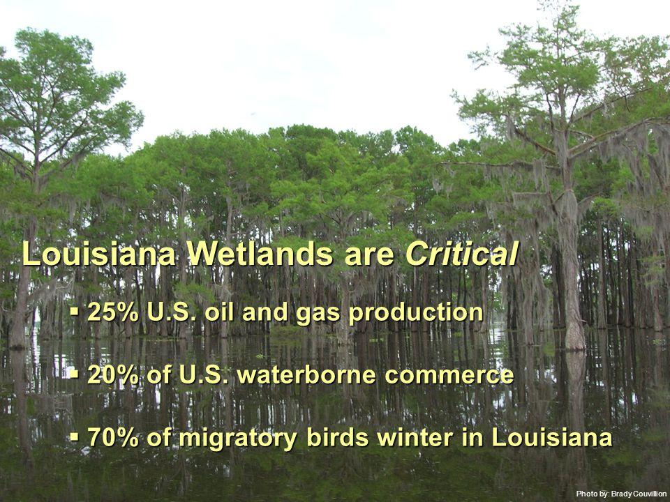 Photo by: Brady Couvillion Louisiana Wetlands are Critical  25% U.S.