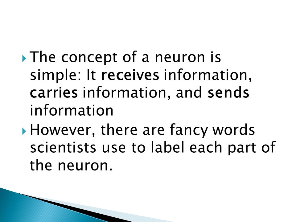  The concept of a neuron is simple: It receives information, carries information, and sends information  However, there are fancy words scientists u
