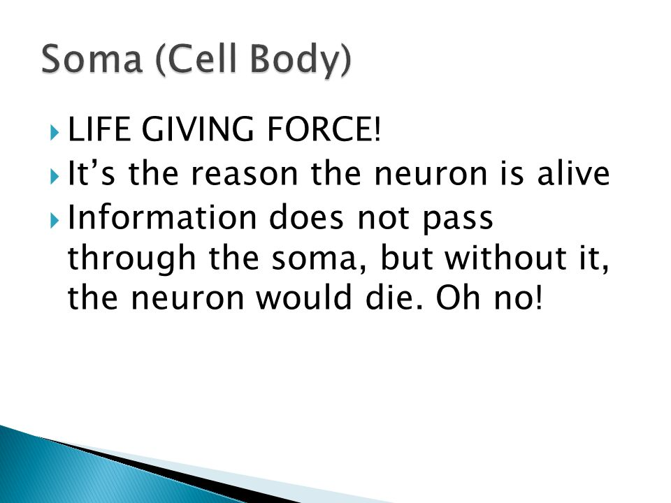  LIFE GIVING FORCE!  It's the reason the neuron is alive  Information does not pass through the soma, but without it, the neuron would die. Oh no!
