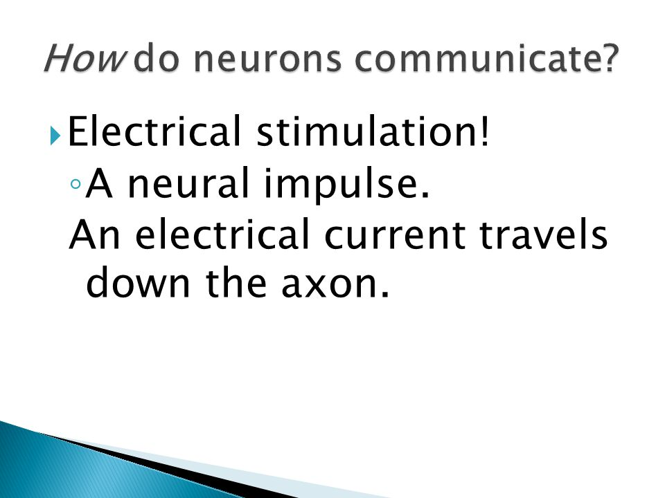 Electrical stimulation! ◦ A neural impulse. An electrical current travels down the axon.