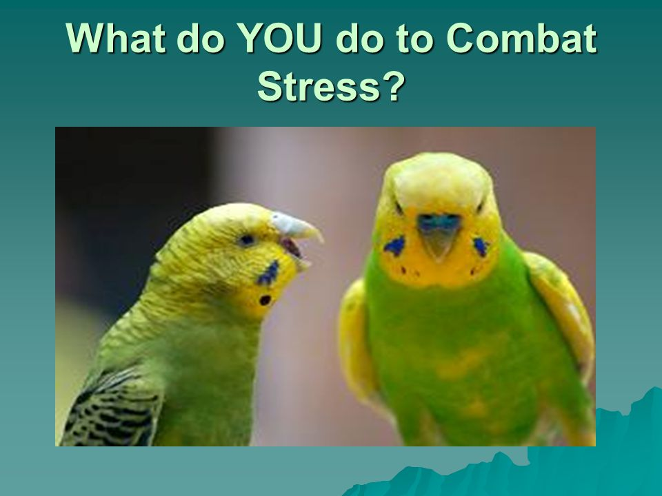 What do YOU do to Combat Stress?