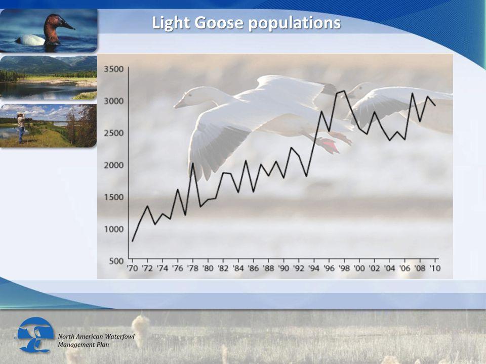Light Goose populations