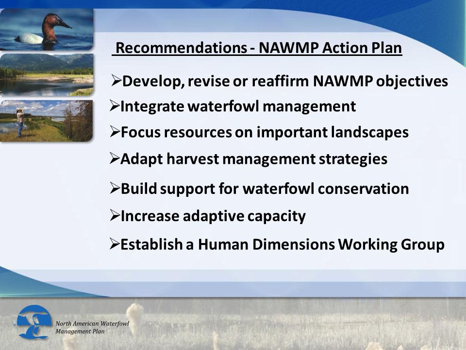 Recommendations - NAWMP Action Plan  Integrate waterfowl management  Develop, revise or reaffirm NAWMP objectives  Focus resources on important lan