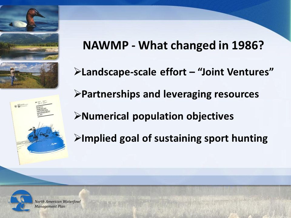Implementing the 2012 NAWMP Revision: Engage stakeholders throughout the process  Future of Waterfowl Management Summit II Revise NAWMP objectives  Waterfowl Populations (10 species from TSA)  Waterfowl hunters, viewers, supporters  Waterfowl Habitat