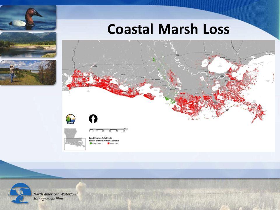Coastal Marsh Loss