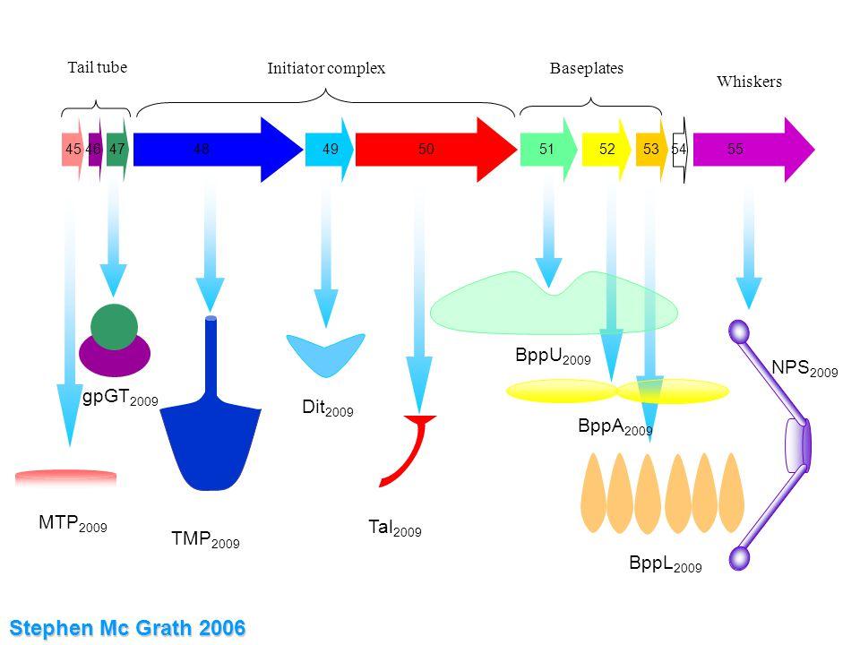45 46 47 48 49 50 51 52 53 54 55 Tail tube Initiator complexBaseplates Whiskers MTP 2009 gpGT 2009 TMP 2009 Dit 2009 Tal 2009 BppU 2009 BppA 2009 BppL 2009 NPS 2009 Stephen Mc Grath 2006