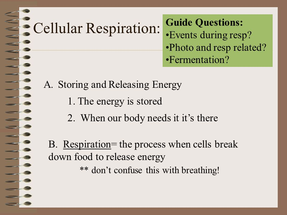 Cellular Respiration: Guide Questions: Events during resp? Photo and resp related? Fermentation? A.Storing and Releasing Energy 1. The energy is store