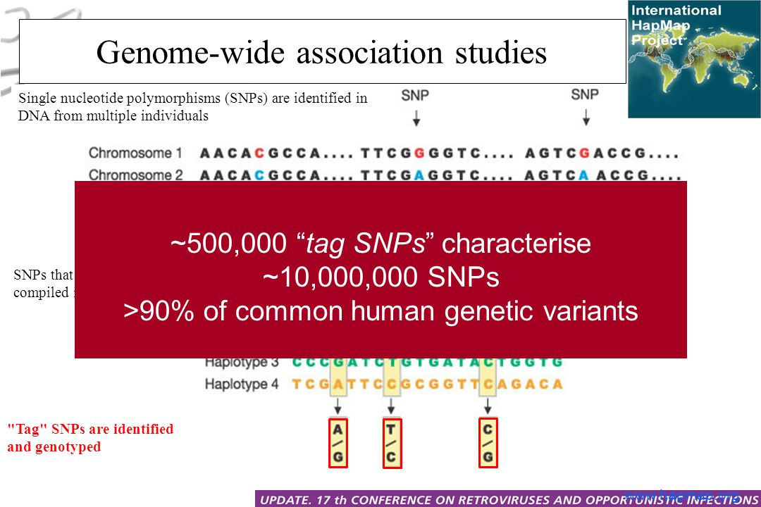 SNPs that are inherited together are compiled into haplotypes Single nucleotide polymorphisms (SNPs) are identified in DNA from multiple individuals Tag SNPs are identified and genotyped Genome-wide association studies www.hapmap.org ~500,000 tag SNPs characterise ~10,000,000 SNPs >90% of common human genetic variants