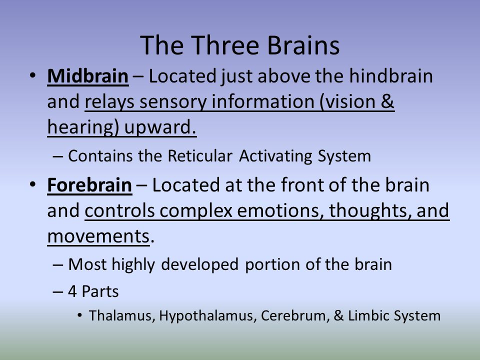 The Three Brains Midbrain – Located just above the hindbrain and relays sensory information (vision & hearing) upward. – Contains the Reticular Activa