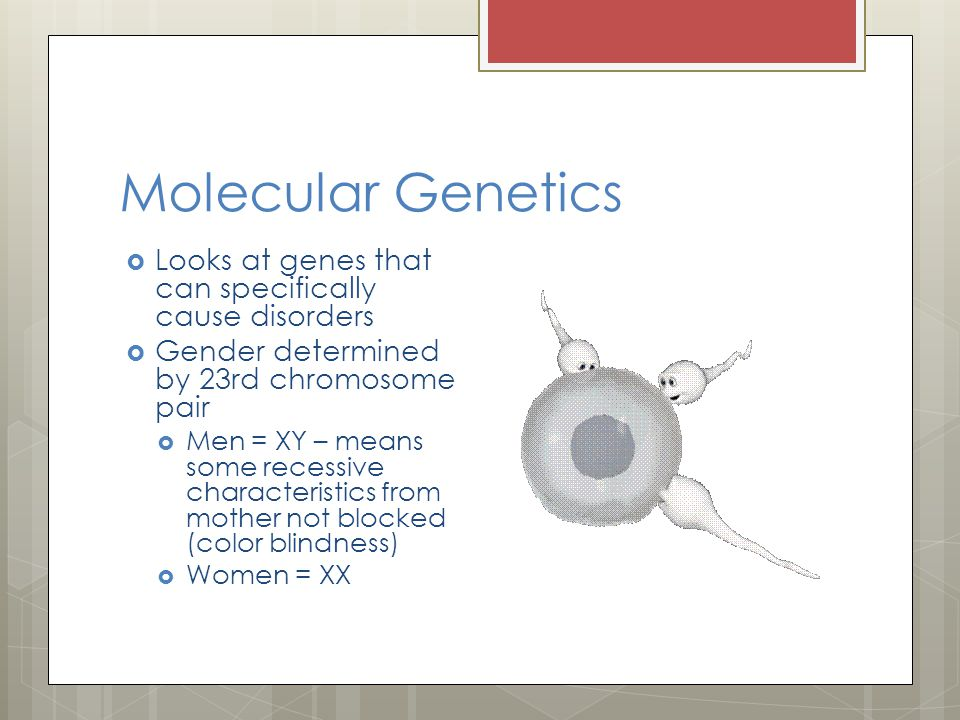 Molecular Genetics  Looks at genes that can specifically cause disorders  Gender determined by 23rd chromosome pair  Men = XY – means some recessive characteristics from mother not blocked (color blindness)  Women = XX
