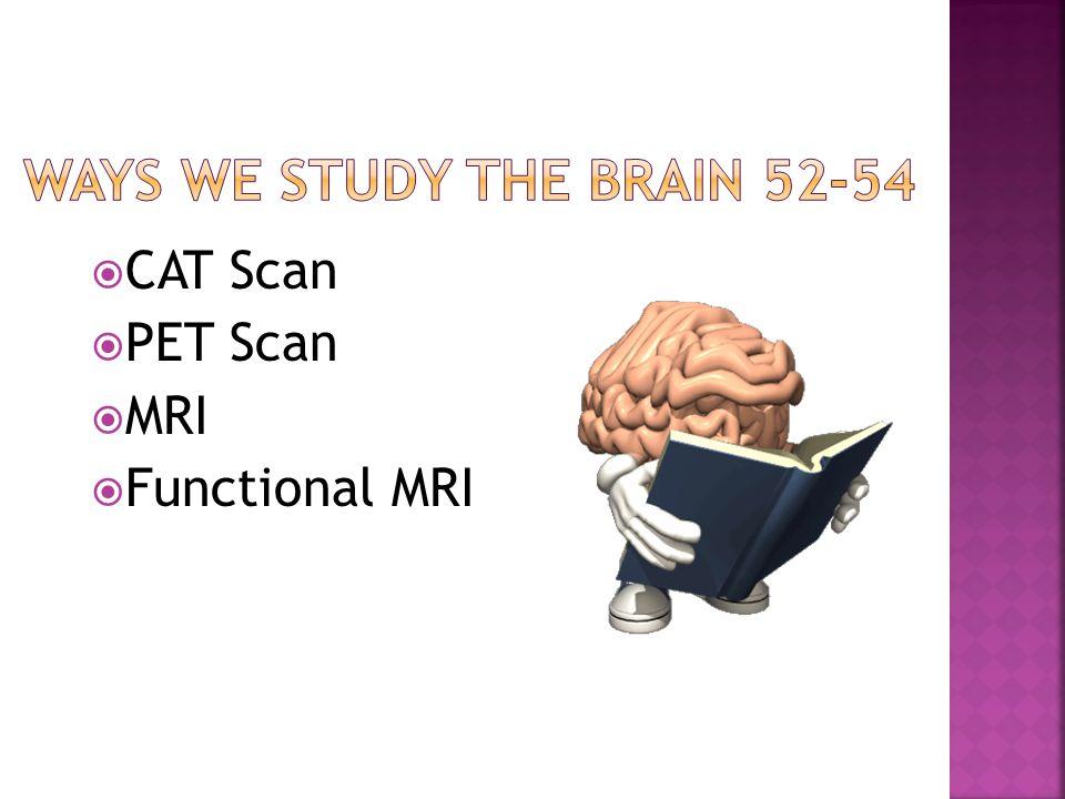  CAT Scan  PET Scan  MRI  Functional MRI