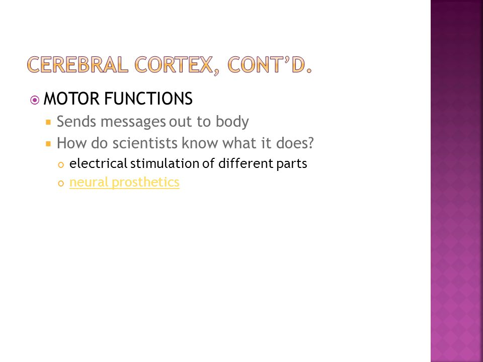 MOTOR FUNCTIONS  Sends messages out to body  How do scientists know what it does? electrical stimulation of different parts neural prosthetics