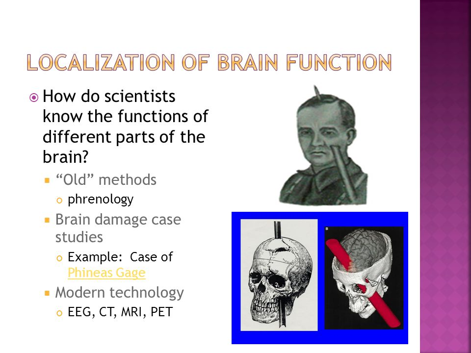 """ How do scientists know the functions of different parts of the brain?  """"Old"""" methods phrenology  Brain damage case studies Example: Case of Phinea"""