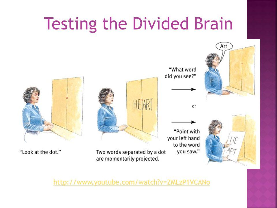 Testing the Divided Brain http://www.youtube.com/watch?v=ZMLzP1VCANo