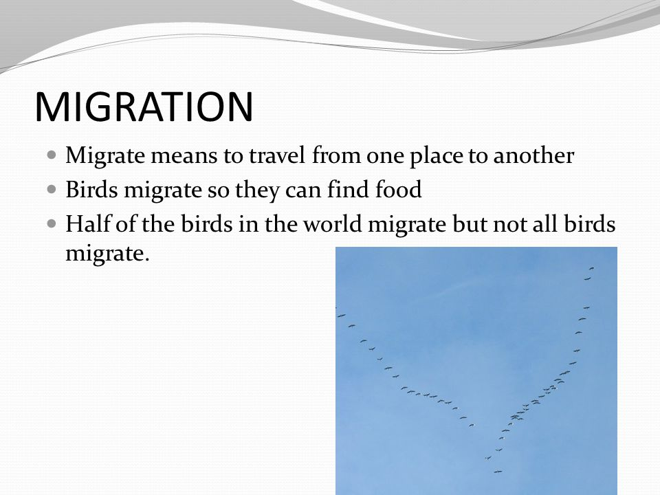MIGRATION Migrate means to travel from one place to another Birds migrate so they can find food Half of the birds in the world migrate but not all bir