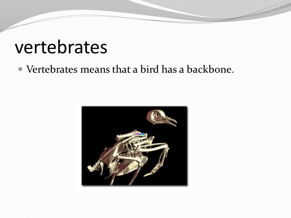 vertebrates Vertebrates means that a bird has a backbone.