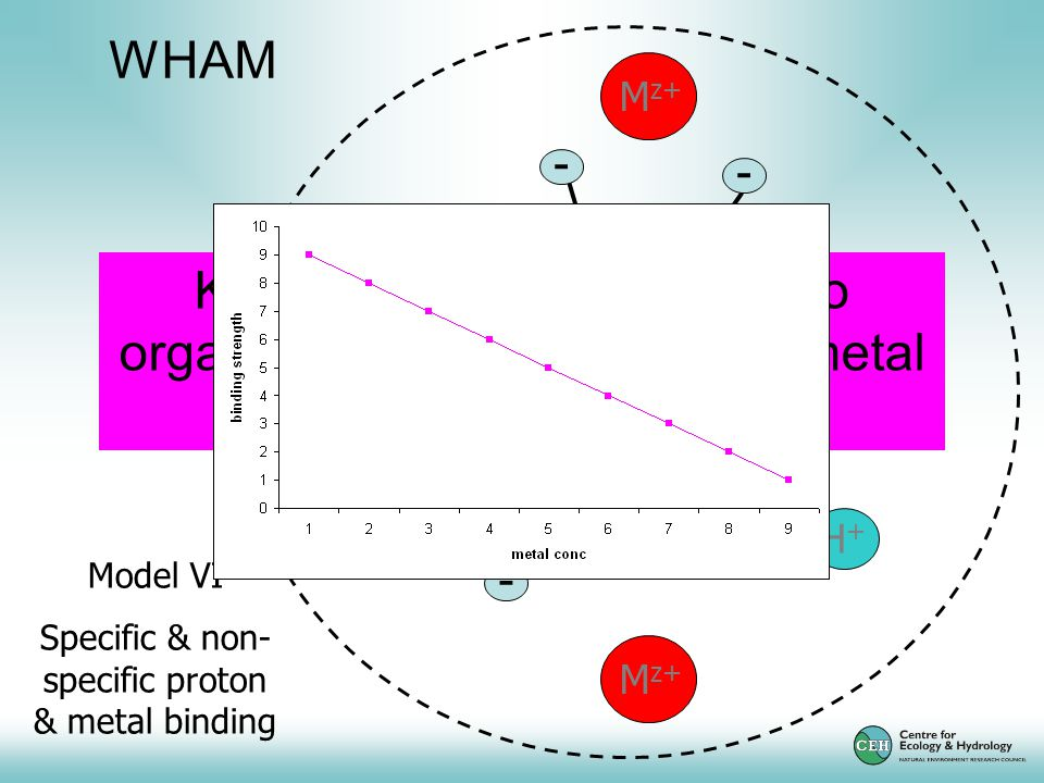 H+H+ M z+ H+H+ - - - - N N Model VI Specific & non- specific proton & metal binding WHAM Key assumption – binding to organic matter dominates for metal ions