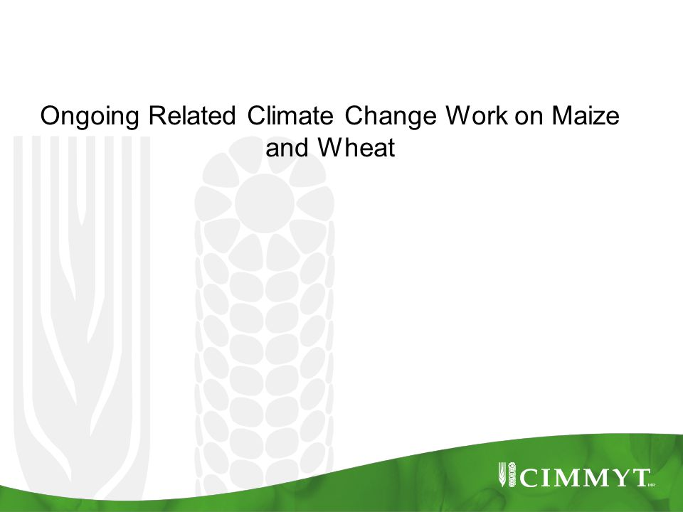 Ongoing Related Climate Change Work on Maize and Wheat