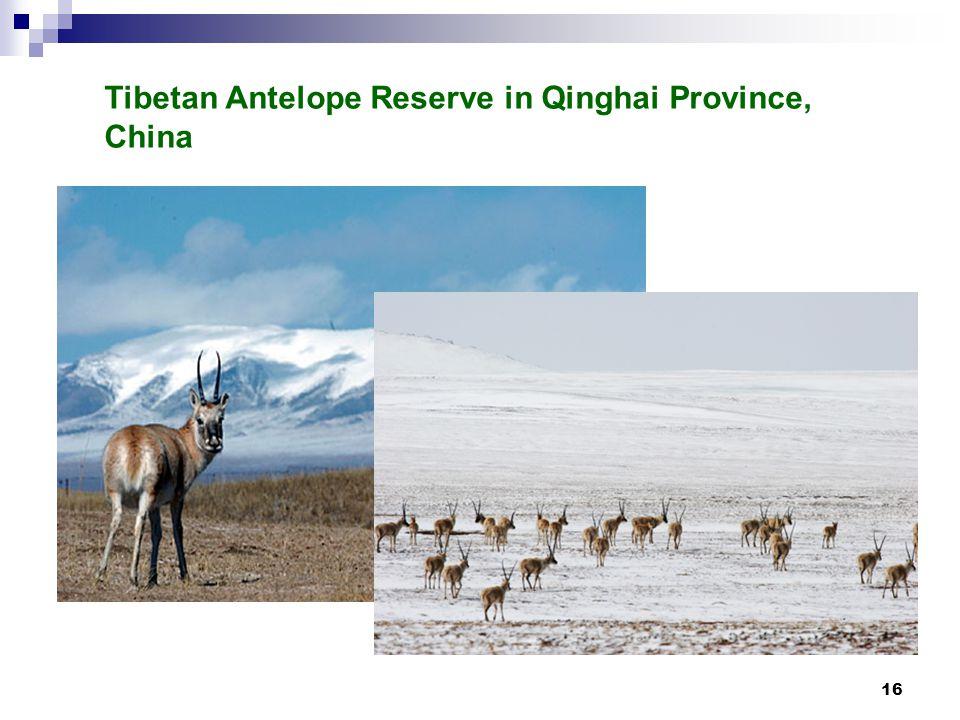 16 Tibetan Antelope Reserve in Qinghai Province, China
