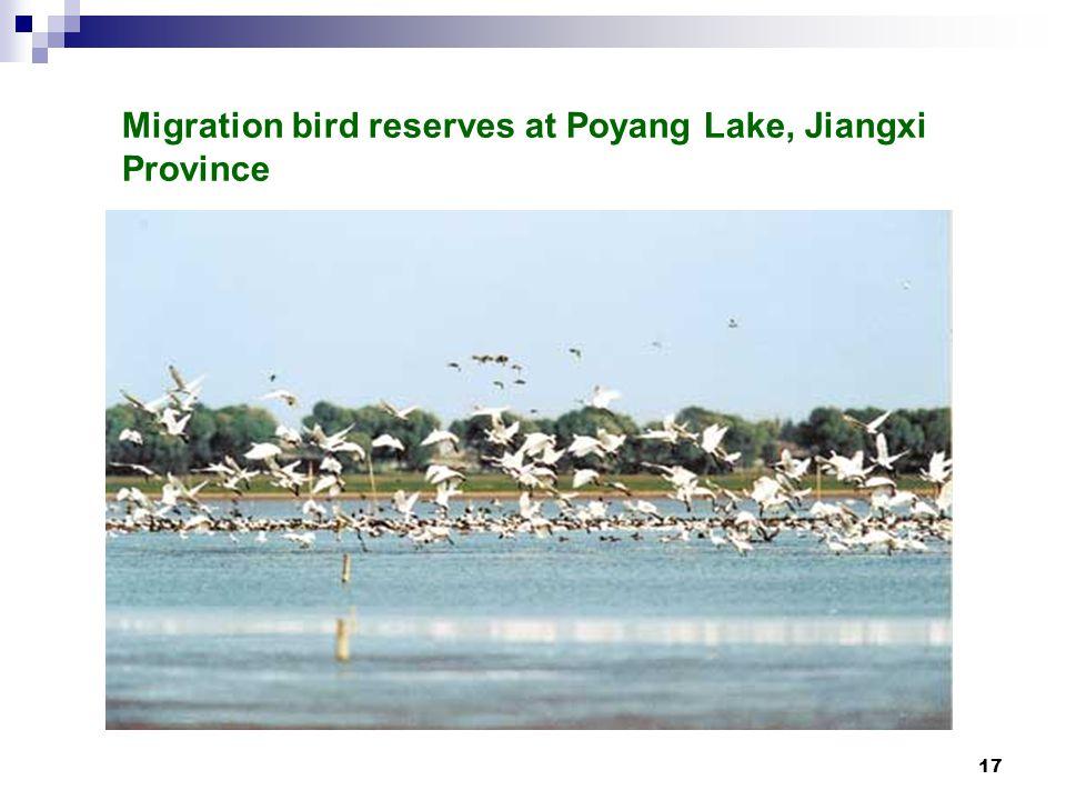 17 Migration bird reserves at Poyang Lake, Jiangxi Province