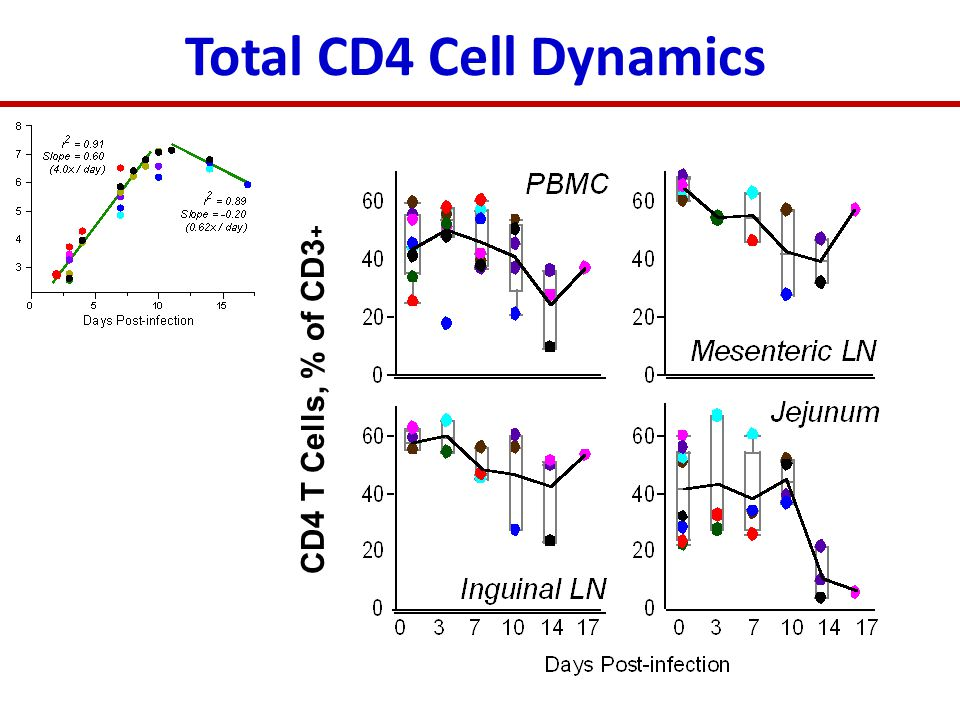 CD4 T Cells, % of CD3 + Total CD4 Cell Dynamics