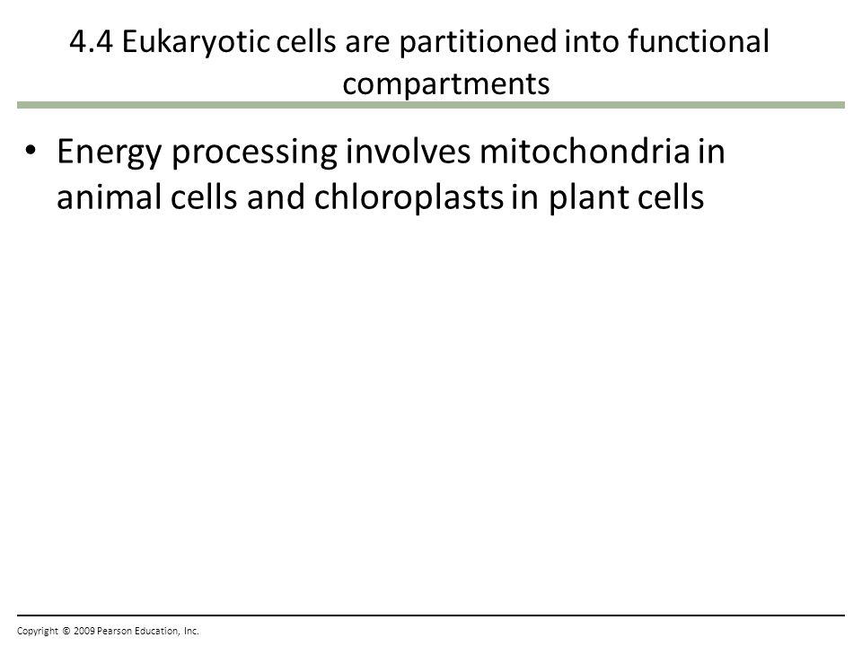 4.4 Eukaryotic cells are partitioned into functional compartments Energy processing involves mitochondria in animal cells and chloroplasts in plant ce