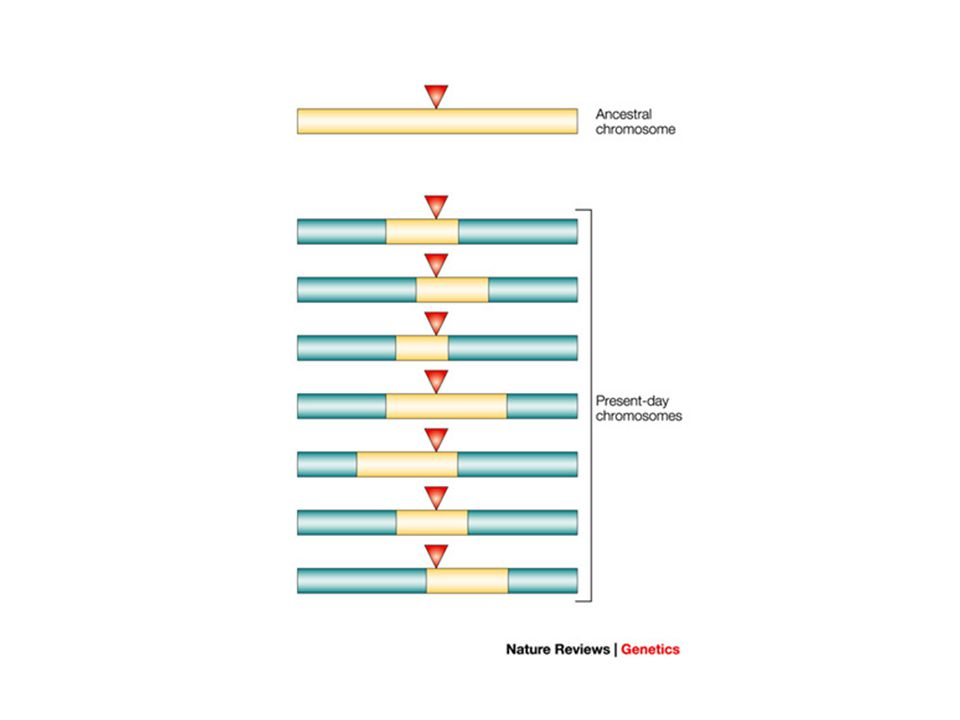 Indirect Association Each of the alleles in the 111212 haplotype is also expected to be indirectly associated with carrying the mutation.