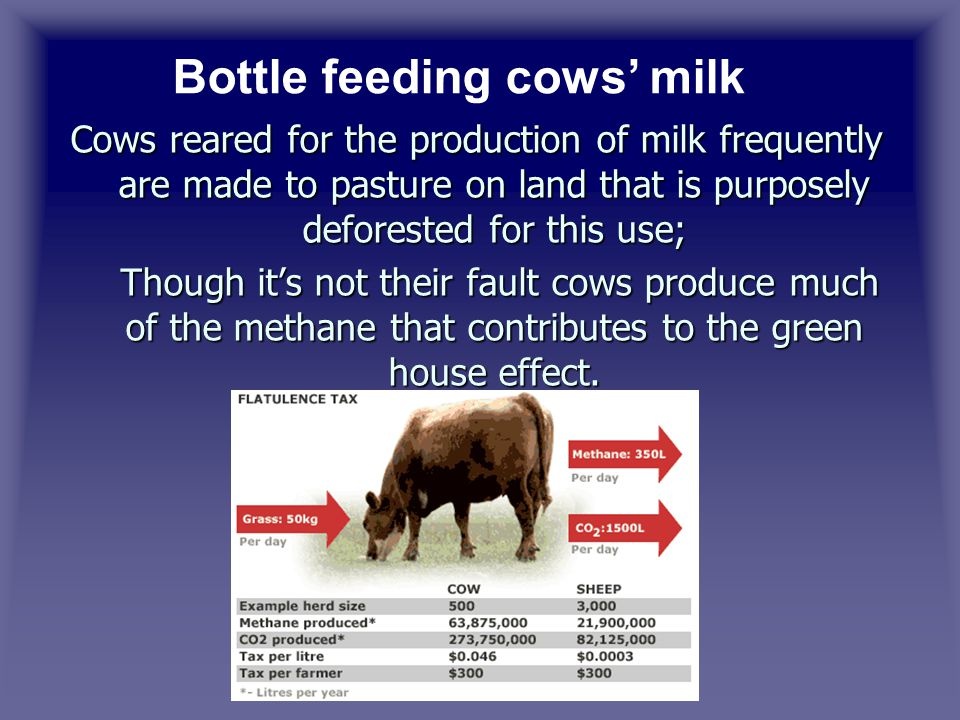 Cows reared for the production of milk frequently are made to pasture on land that is purposely deforested for this use; Though it's not their fault cows produce much of the methane that contributes to the green house effect.