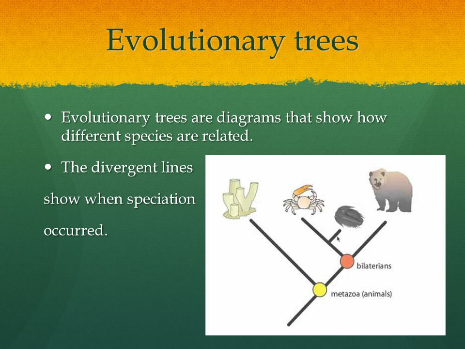 Evolutionary trees Evolutionary trees are diagrams that show how different species are related. Evolutionary trees are diagrams that show how differen