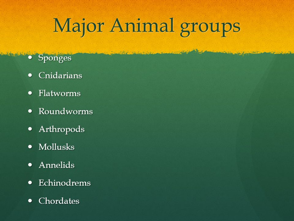Major Animal groups Sponges Sponges Cnidarians Cnidarians Flatworms Flatworms Roundworms Roundworms Arthropods Arthropods Mollusks Mollusks Annelids A