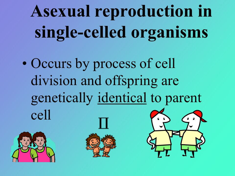 Asexual reproduction in single-celled organisms Occurs by process of cell division and offspring are genetically identical to parent cell