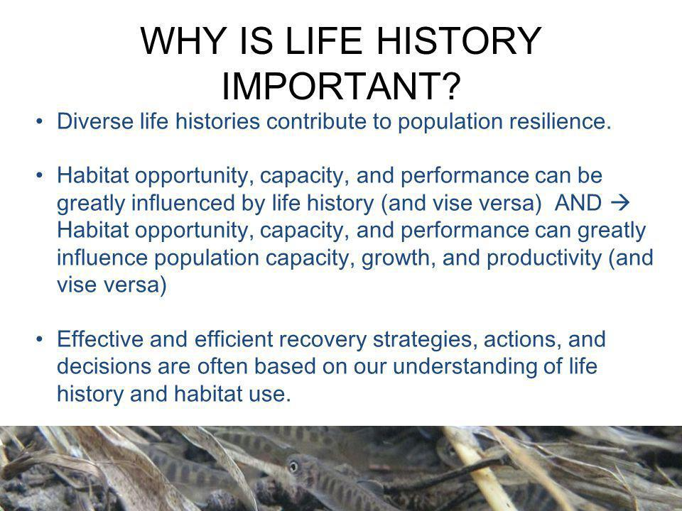 WHY IS LIFE HISTORY IMPORTANT? Diverse life histories contribute to population resilience. Habitat opportunity, capacity, and performance can be great