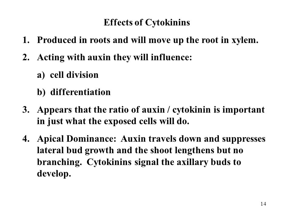14 Effects of Cytokinins 1.Produced in roots and will move up the root in xylem. 2.Acting with auxin they will influence: a) cell division b) differen