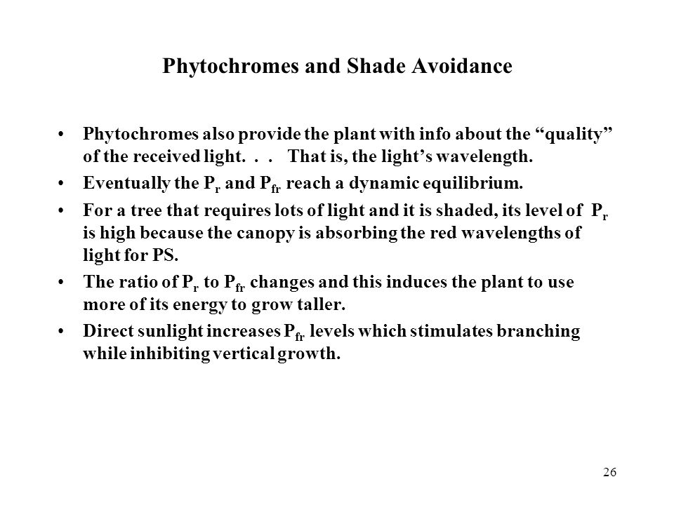 """Phytochromes and Shade Avoidance Phytochromes also provide the plant with info about the """"quality"""" of the received light... That is, the light's wavel"""