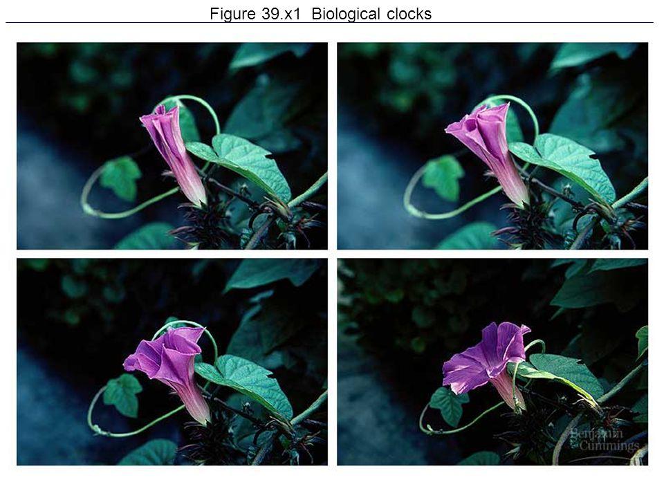 28 Figure 39.x1 Biological clocks