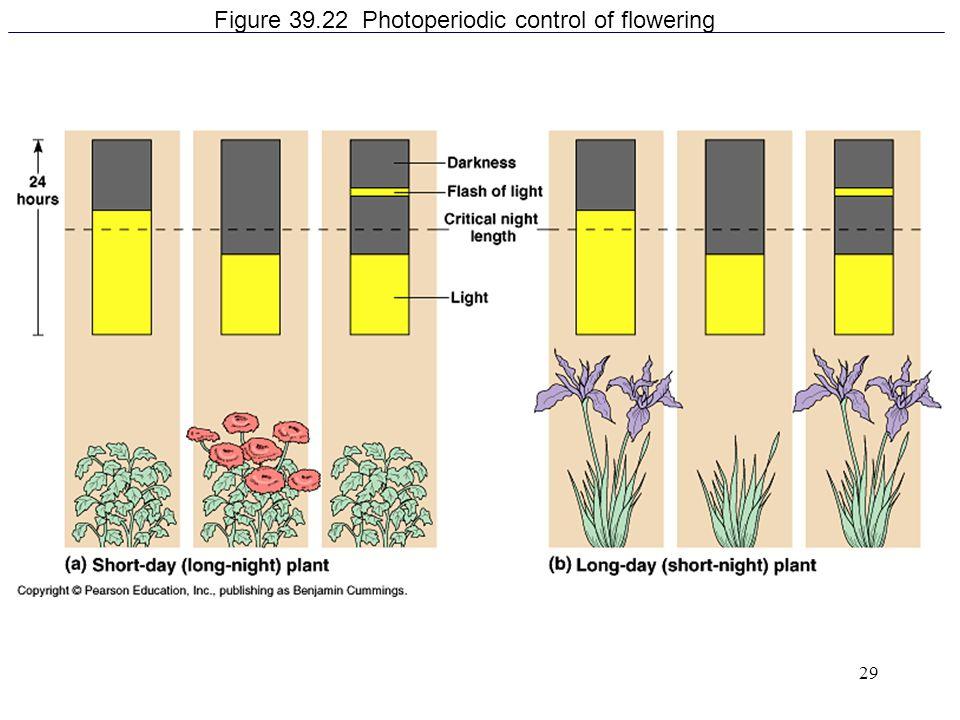 29 Figure 39.22 Photoperiodic control of flowering